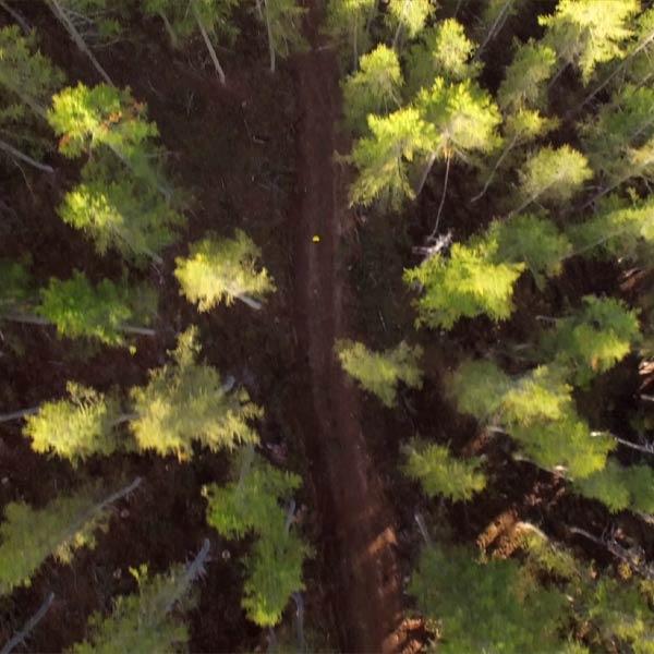 vue aérienne du parcours du trail Gapencimes dans la forêt